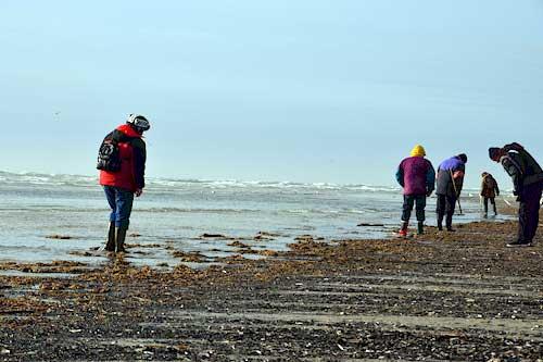 Bernstein in Dänemark finden - Romo Nordsee