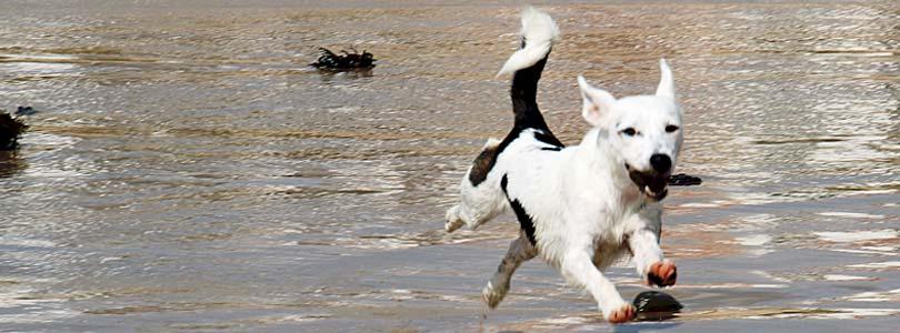 Ferienhaus Römö mit Hund - Insel Romo Dänemark