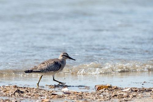 Vögel auf Romo Strand,
