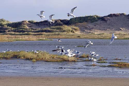 Interessante Naturgebiete auf Romo - Natur-favoriten