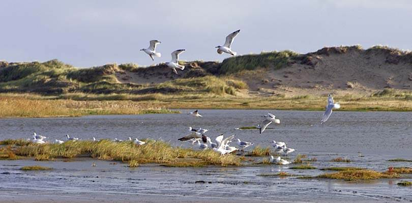 Romo Strand mit Möven, Dänemark