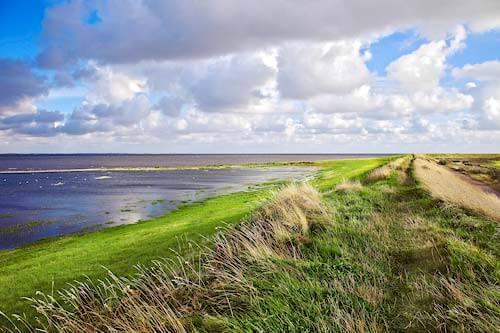 Juvre Weiden auf der Insel Romo, Dänemark
