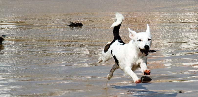 Ferienhaus mit Hund auf Römö in Dänemark