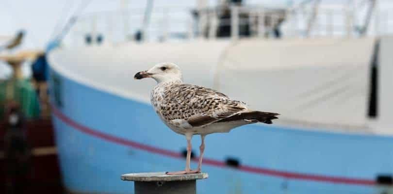 Havneby Sehenswürdigkeiten