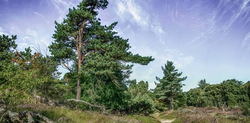 Wälder auf die Insel Römö in Dänemark