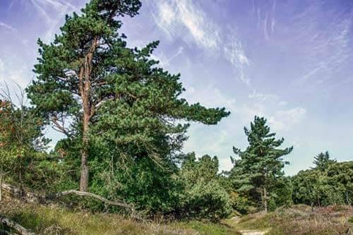 In den Wald auf der Insel Römö wandern